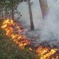 На Житомирщині рятувальники знову взялися до гасіння лісових пожеж