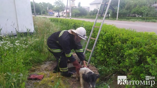 У селищі неподалік Житомира рятувальники витягнули з каналізаційної ями пса. ФОТО
