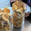 По чому лисички на Житньому ринку у Житомирі? ФОТО