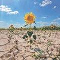 Тропічні ночі та хурма в садах: чого чекати від зміни клімату Україні