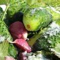 Найшвидший рецепт малосольних огірків в пакеті