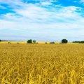 В Україні хочуть змінити порядок приватизації держземель