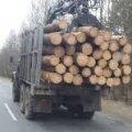 На Житомирщині продовжують вирубувати ліс