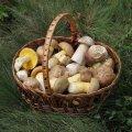 Секрети приготування білих грибів для супу, перед заморожуванням, смаженням і не тільки