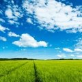 Погода в Житомирі та області на 20 липня