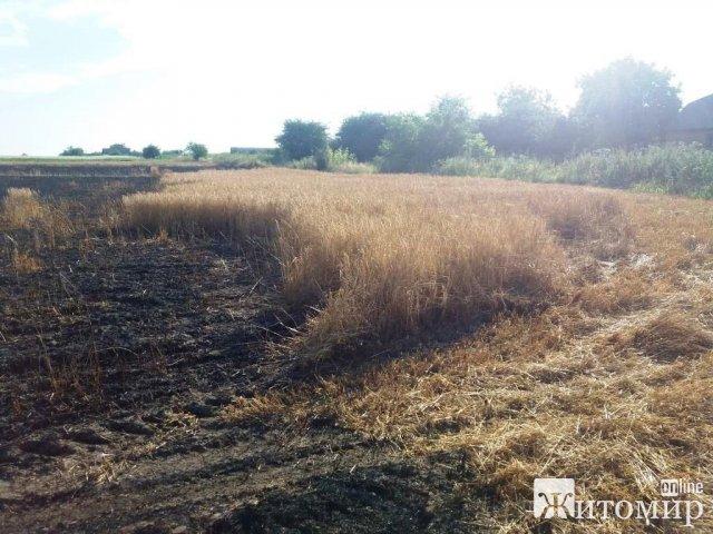 У селищі Житомирської області горіло поле з ячменем. ФОТО