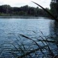 У Житомирській області громадська організація незаконно користувалася ставком вартістю понад 15 млн грн, – прокуратура