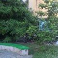 """В одному з житомирських дворів """"нові мешканці"""" знищують дерева? ФОТО"""
