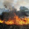 На Житомирщині знову горить суха трава та сміття