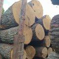 На Житомирщині прокуратура розпочала кримінальне провадження за фактом підробки лісгоспомдокументів на перевезення колод дубу
