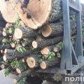В одному з сіл Житомирщини поліцейські зупинили автомобіль з деревиною та розпочали перевірку