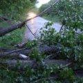 На Житомирщині негода повалила дерева на дороги