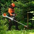 Житомирське лісове господарство закупить кущорізи