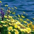 Август будет жаркий и с периодами резкого похолодания