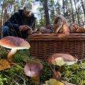 У житомирському краєзнавчому музеї відбудеться виставка грибів