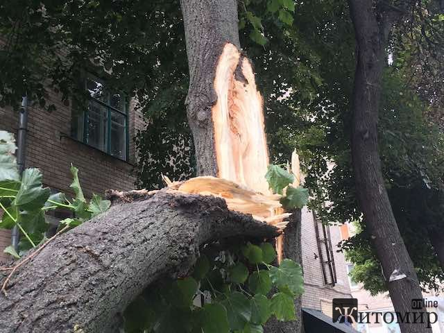 Що трапилося сьогодні у Житомирі на Леха Качинського? ФОТО