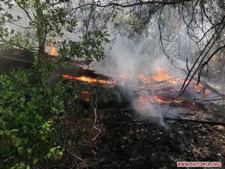 У Житомирській області рятувальники попередили лісову пожежу