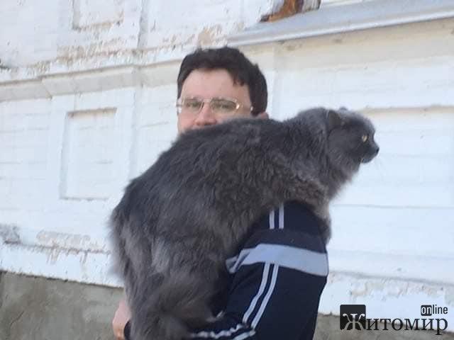 На житомирських вулицях сьогодні з'явився величезних кіт. ФОТО
