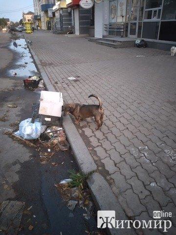 Мешканці на вулиці Хлібній страждають від базару, що у них під вікнами, Сухомлин не реагує