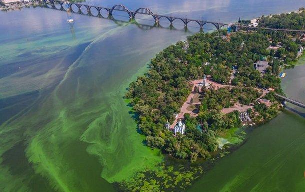Через спеку вода у Дніпрі сильно позеленіла. ФОТО