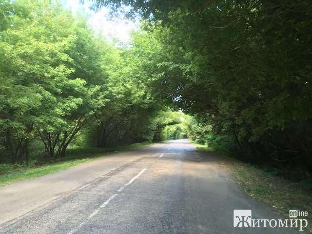"""Романтичний зелений тунель на трасі """"Житомир-Сквира"""". ФОТО"""