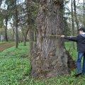 На Житомирщині 10 старовікових дерев хочуть оголосити пам'яткою природи