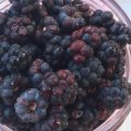 Скільки коштує ожина сьогодні у Житомирі і де її можна купити? ФОТО