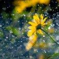 Спека до +33 і дощі на заході: погода в Україні