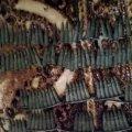 На Житомирщині чоловік може отримати 3-7 років в'язниці за збереження сотні набоїв