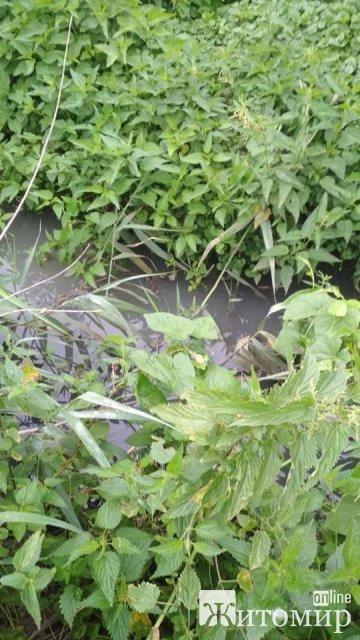 У Житомирі в річці Крошенка виявили перевищення аміаку. ФОТО