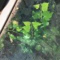 """У знаменитому житомирському """"підземеллі"""" виросло дерево. ФОТО"""