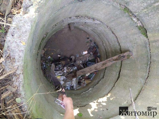 У Новограді-Волинському собака впала у колодязь глибиною 2,5 м. ФОТО
