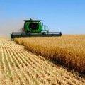 Статистики розповіли, скільки аграрії Житомирщини вже зібрали врожаю