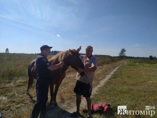 У Лугинському районі поліцейські повернули власникові викрадену кобилу. ФОТО