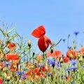 Свято 30 серпня: що заборонено робити сьогодні, головні прикмети дня
