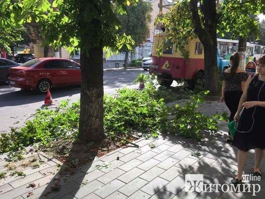 На Театральній у Житомирі обрізають гілки каштанів. ФОТО