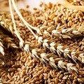 Хліб подорожчає? В Україні очікується зменшення обсягів врожаю зернових