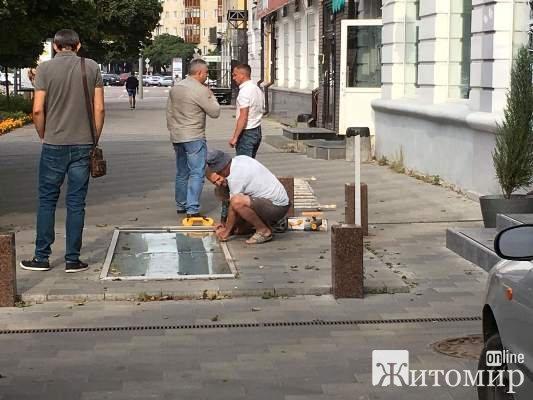 """У Житомирі комунальники повирізали """"дерева Сухомлина"""". ФОТО"""