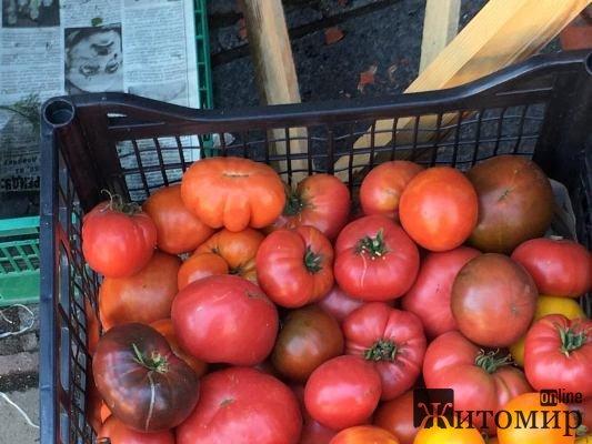 По чому сьогодні домашні помідори на Житньому ринку у Житомирі? ФОТО
