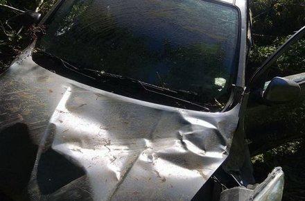 Поблизу Житомира знайшли розбитий автомобіль, який викрало молоде подружжя