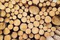 На Житомирщині підприємець нелегально продавав деревину за кордон