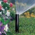 Житомирський водоканал не нараховуватиме плату за полив присадибних ділянок за один місяць