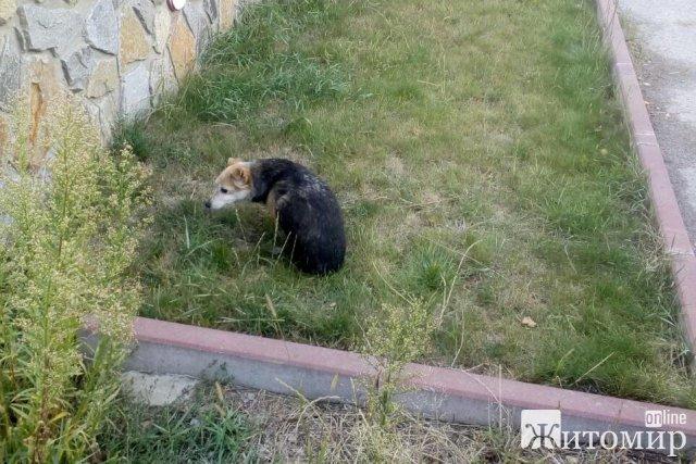 У центрі Новограда-Волинського собака впав у закинутий колодязь. ФОТО