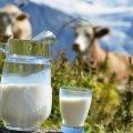 Навіщо в молоко додають крейду та крохмаль?