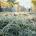 Синоптики попередили про перші заморозки