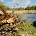 Фірма з Вінницької області за понад пів мільйона видалить пошкоджені дерева у Житомирі