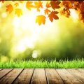 Сонячно і до +25 тепла: прогноз погоди в Україні на 20 вересня