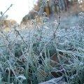 Синоптики попередили про нічні заморозки