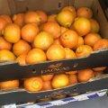 У Житомирі з'явилися перші цьогорічні грейпфрути. ФОТО