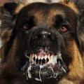 Умер малыш с Донбасса, растерзанный собаками